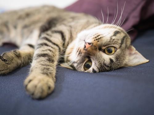 クネクネする猫