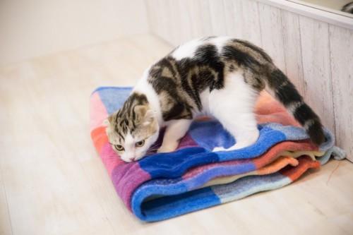 カラフルなタオルの匂いをかぐ猫