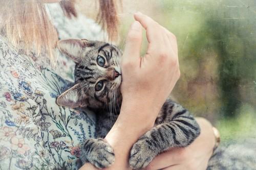 甘えて手を掴む子猫