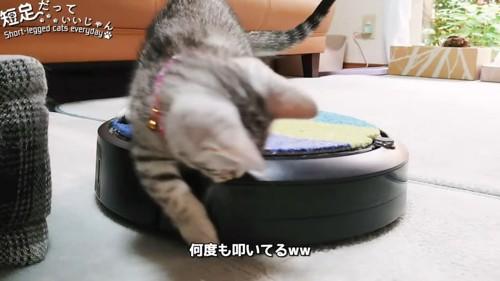 猫パンチをする猫
