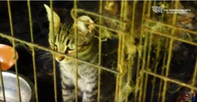 汚れたケージの中の猫