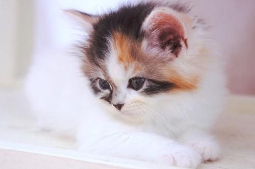 横を向く子猫