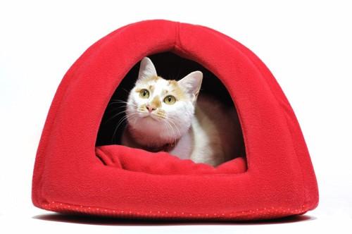 赤いベッドに入る猫