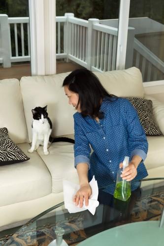 クエン酸で掃除をする人と猫