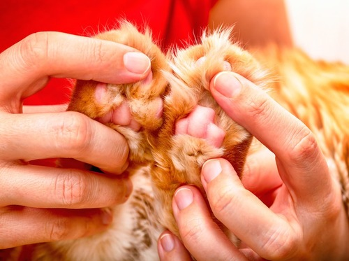 猫の肉球を触っている飼い主
