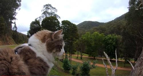 山の中に佇む白と茶の猫ビンディ