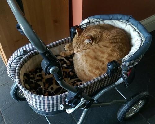 カートの中で眠る猫