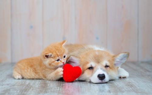 遊びたい猫と眠い犬
