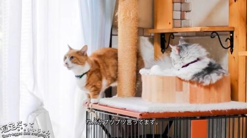 立っている茶白猫
