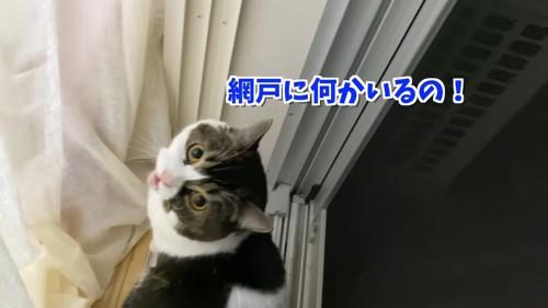 振り向いてなく猫