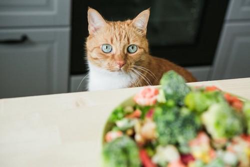 テーブルの上の食事を見つめる猫