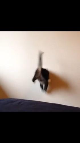 壁にぶつかる猫