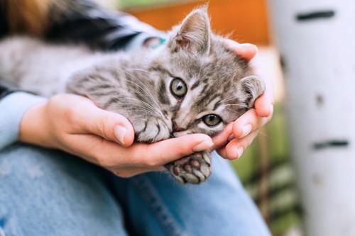 女性に抱き上げられた子猫