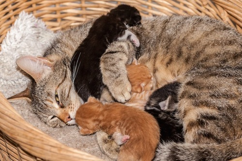 バスケットの中で授乳する母猫