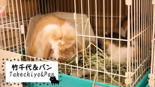 ケージの中にいるウサギと猫