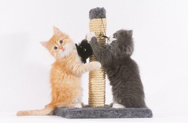 爪とぎポールの横に立っている子猫
