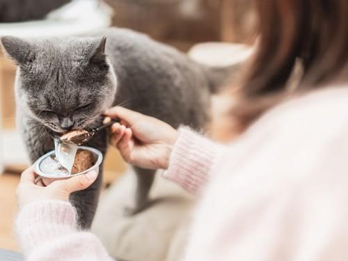 ご飯を食べさせてもらう灰色猫