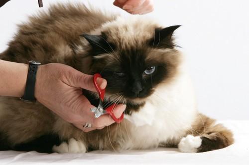 爪を手入れされる猫