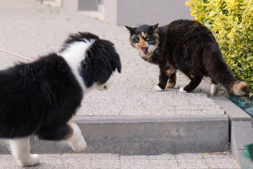 散歩中の犬に威嚇する猫