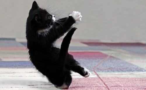 激しく遊んでいる白黒猫