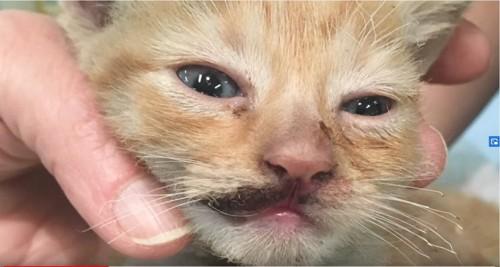 顔に傷を負った子猫