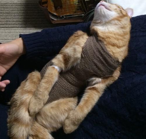 術後服を着ている去勢後の猫