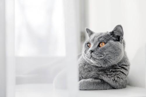 一匹で寛ぐ猫