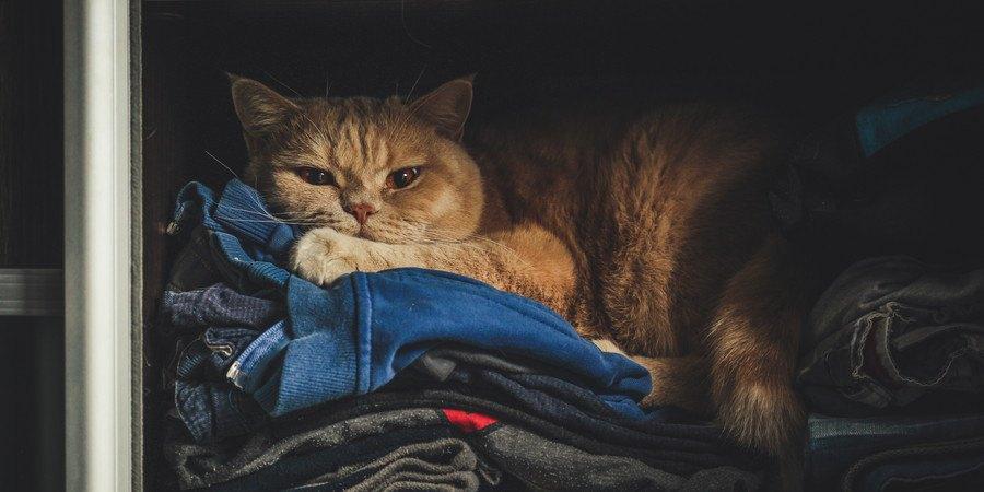 洋服の上の猫