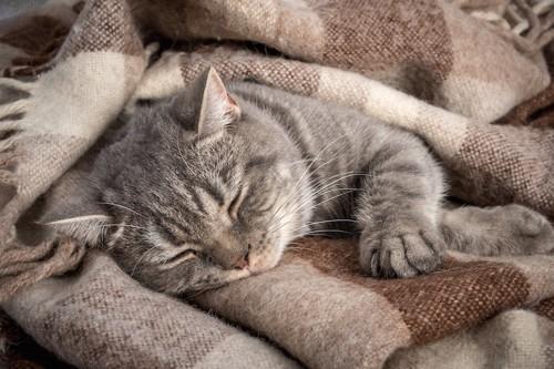 ブランケットの上で眠る猫