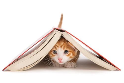 本の下に隠れる子猫
