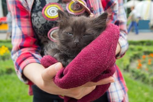 タオルケットに入った猫