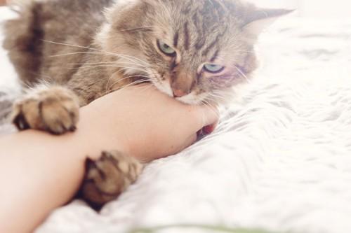 人の手を抱えてかじる猫