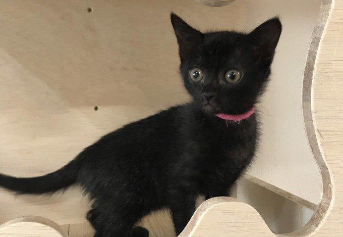 おめかしした黒猫ちゃん
