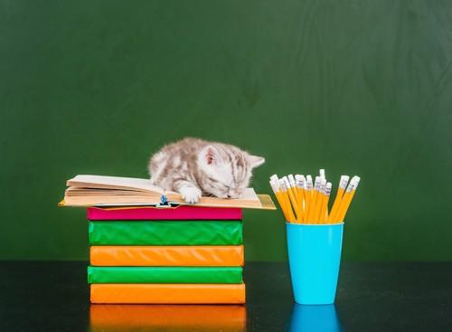 積み上げられた本の上で眠る子猫