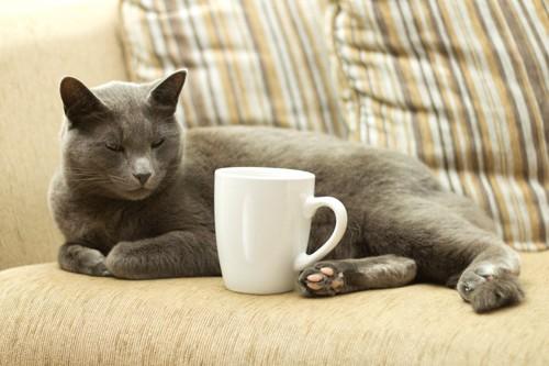 ソファの上のカップと猫