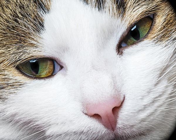瞬きする猫