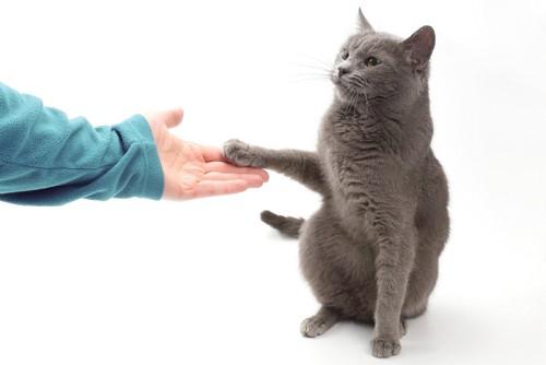 そっと人間の手に触れる猫