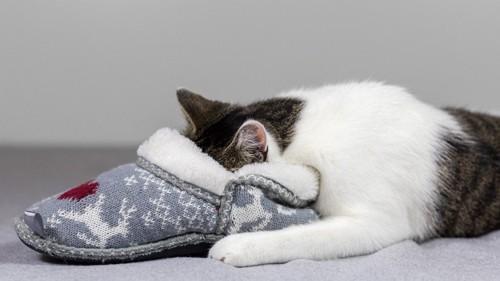 スリッパに頭を入れる猫