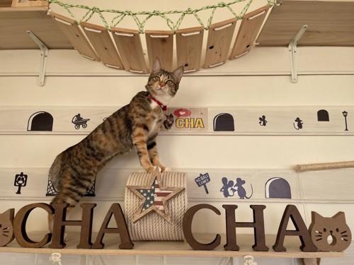 キャットウォークからこちらを見る猫