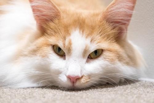 文句がありそうな猫