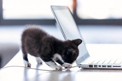 パソコンケーブルを触る子猫
