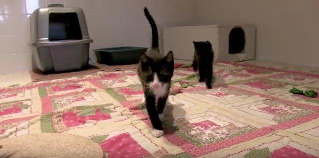 シェルターの猫たち1