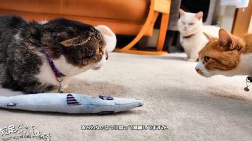 黒系の猫と茶白猫