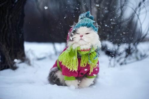 毛糸の服と帽子をかぶって雪の中で佇む猫