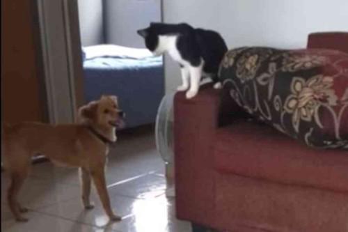 犬を追い詰める