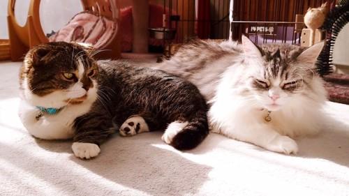 隣の猫を見る猫
