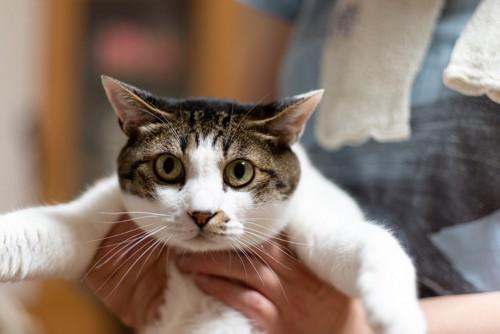 抱っこをされて嫌がる猫