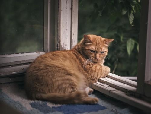 窓辺で横たわる猫