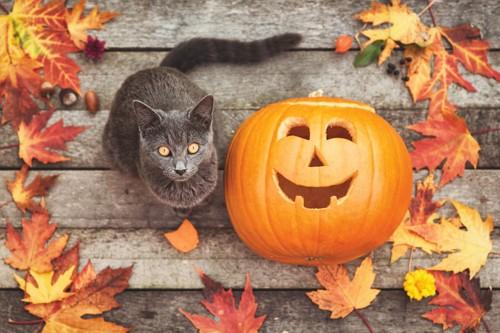 ハロウィンのかぼちゃと猫の置物
