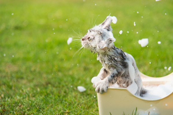 泡まみれの猫